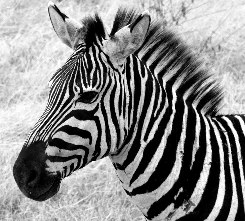 Long Safaris | Swala Safaris