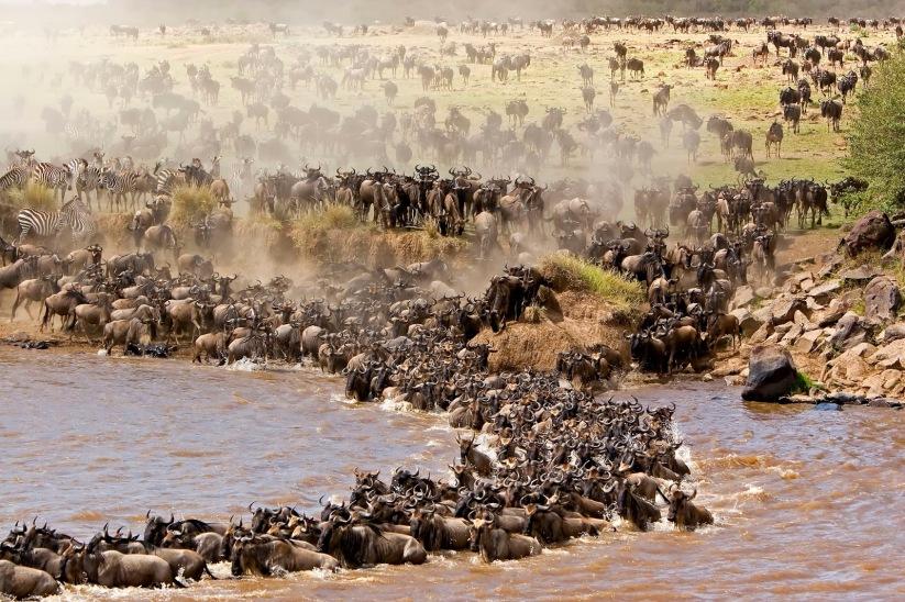 Tokeo la picha la serengeti Naional park